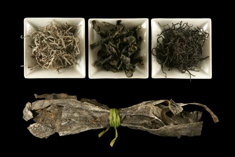 seaweed_blog