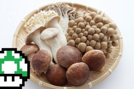 mushrooms_blog