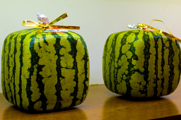 Square Watermelon