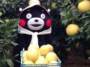 Kumamon Just Loves Kudamono aka Fruit!