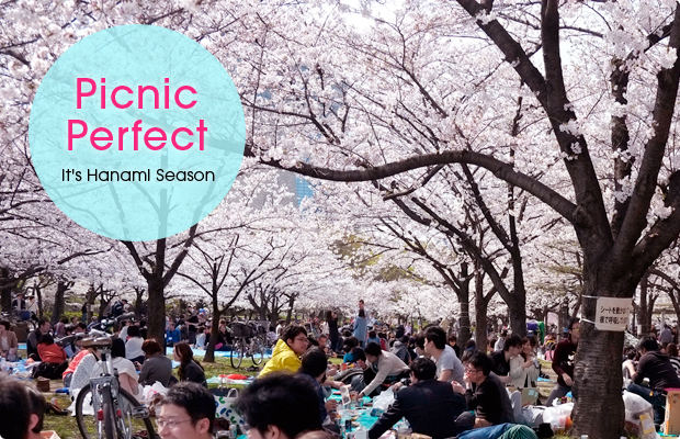Picnic Perfect It's Hanami Season
