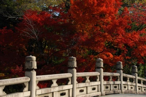flickr Mal B autumn leaves