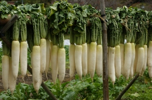 Unpeeled Daikon in the Wild