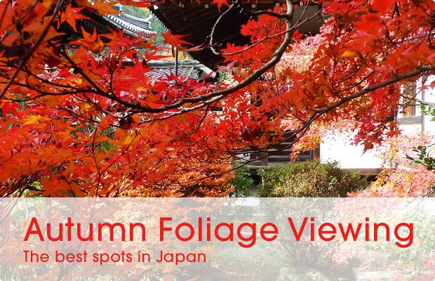 banner_blog_foliage