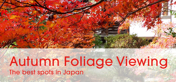 banner_blog_foliage_shorter