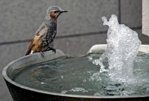 Onsen Bird