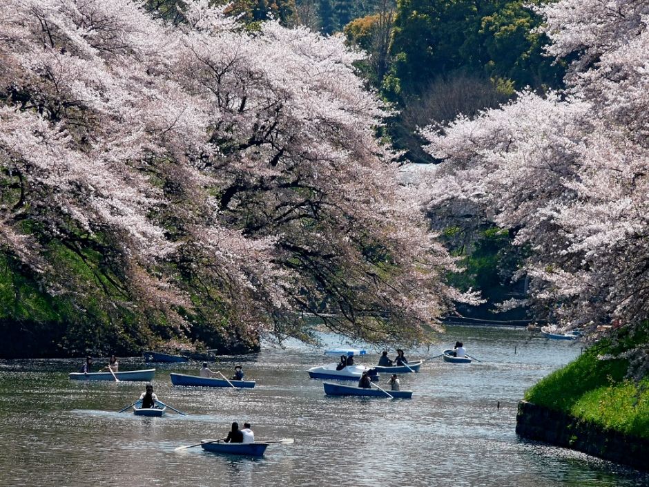 blog - Dan - flickr - sakura in Chiyoda Tokyo