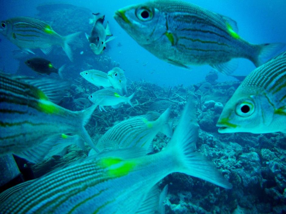 Marine life in Okinawa.jpg