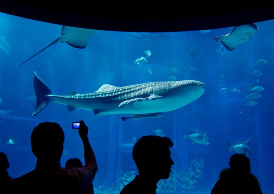 Osaka aquarium.jpg